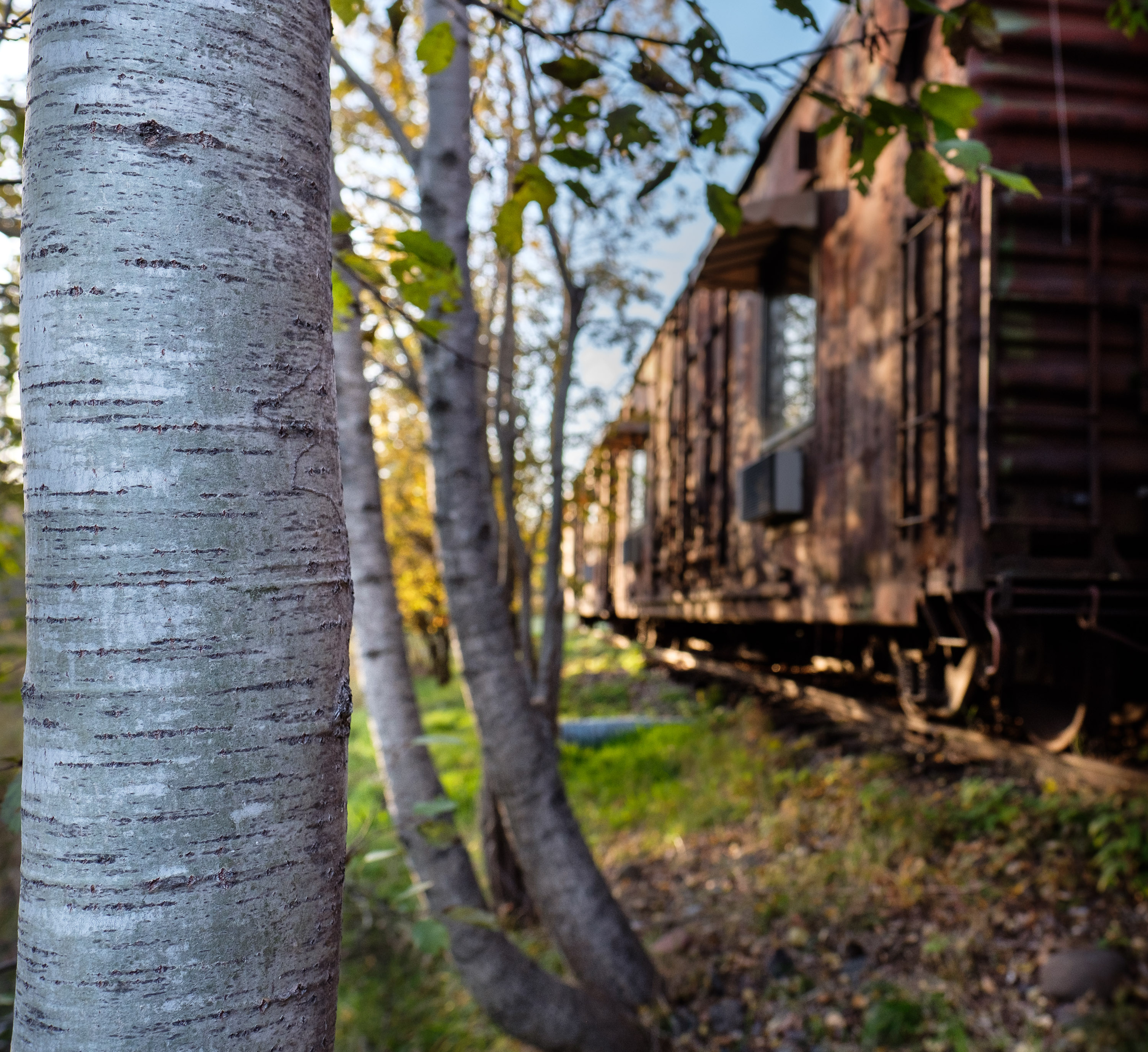 Boxcar in Woods
